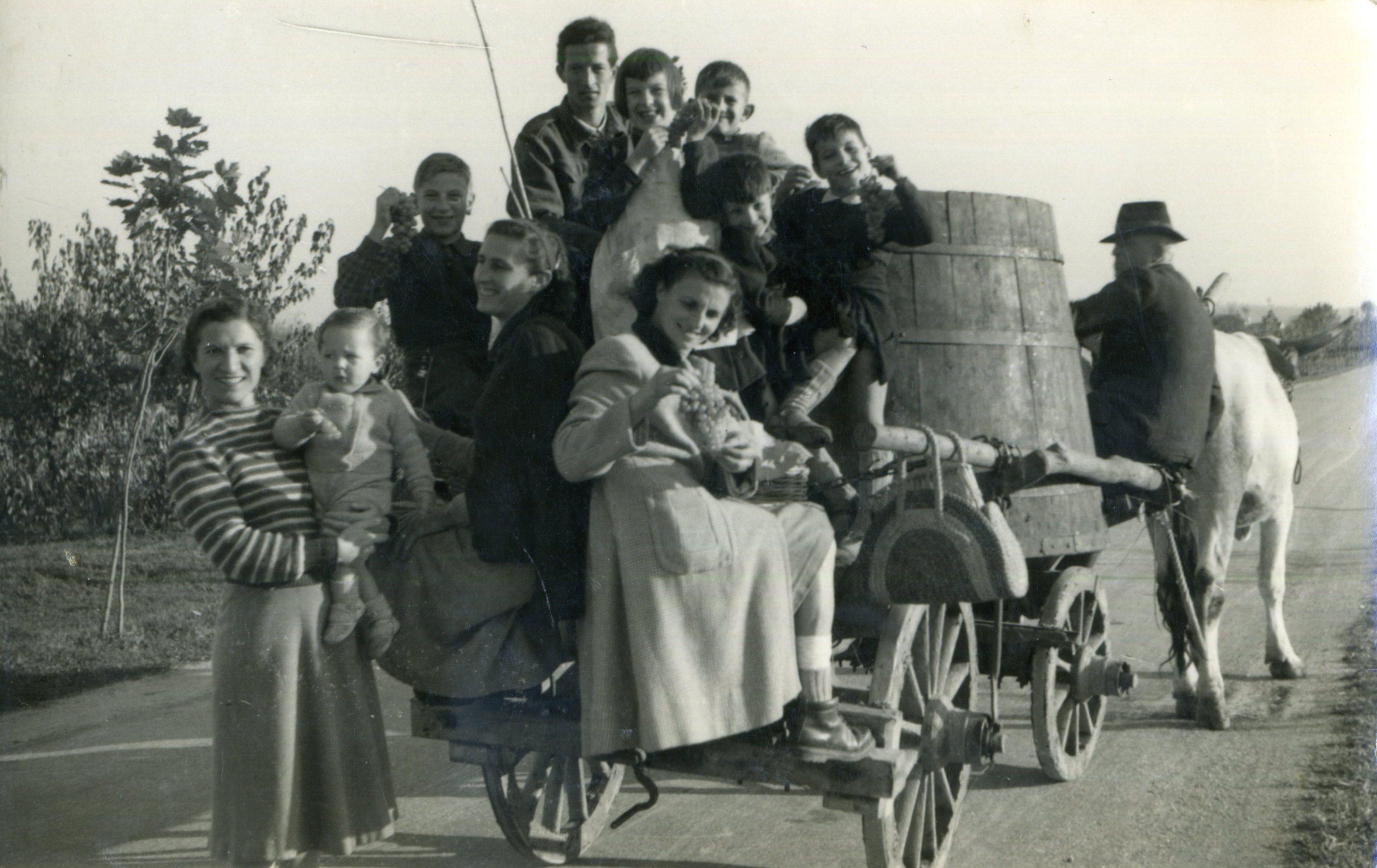 Vendemia 1951